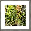 Chatooga Forest Trail Framed Print