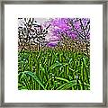 Cherry Orchard After The Storm Framed Print