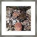 Clear And Pure Framed Print