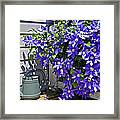 Clematis And Watering Can Framed Print