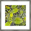 Closeup Of Morning Dew On Leaves Framed Print