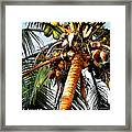 Cocoanuts Squared Framed Print