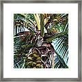 Coconut Palm Inflorescence Framed Print by Karon Melillo DeVega