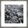Cold Winter Snow Framed Print