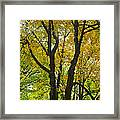 Color Me Yellow Framed Print