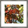 Colorado October Framed Print