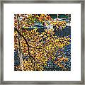 Colorful Fall Leaves Over Blue Water Framed Print