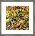 Colorful Maple Leaves Framed Print
