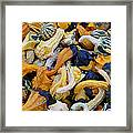 Colorful Mix Of Gords Framed Print
