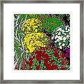 Colorful Mums Photo Art Framed Print
