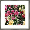 Colorful Snapdragons In San Antonio Framed Print