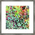 Colorful Succulent Plants For You Framed Print