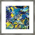 Colorful Tropical Fish Framed Print by Elena Elisseeva