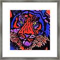 Colorfull Tiger Framed Print