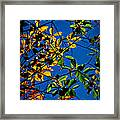 Colors Of The Autumn Elm Framed Print