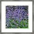 Colour Purple Framed Print