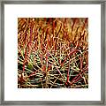 Complexity Of Nature Framed Print