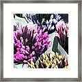 Containers Of Mixed Iris At The Farmer's Market Framed Print