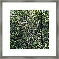 Contrast Of Bamboo Leaves Framed Print