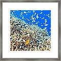 Coral Reef Panorama Framed Print