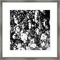 Cotton Classic B And W Framed Print