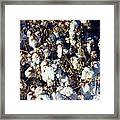 Cotton The Thread That Binds Framed Print