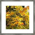 Country Color 10 Framed Print