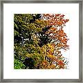 Country Color 2 Framed Print