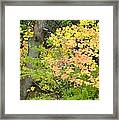 Country Color 23 Framed Print
