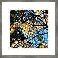 Country Color 25 Framed Print