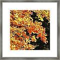 Country Color 26 Framed Print
