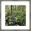 Creek In The Rain Forest Framed Print