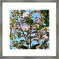 Crepe Mertle In Bloom Framed Print