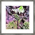 Crevis Framed Print