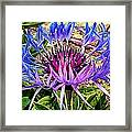 Crowned Beauty Framed Print by Kevin D Davis