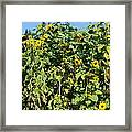 Crows In The Sunflowers Framed Print
