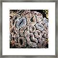 Curler Coral Framed Print