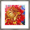 Red And Yellow Dahlia Framed Print