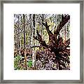 Cypress Roots Framed Print