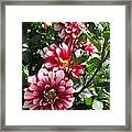 Dahlia Named Yoro Kobi Framed Print