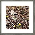 Daisies In The Dirt Framed Print