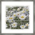 Daisy Days Framed Print