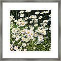 Daisy Day's Framed Print by Karen Grist