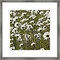 Daisy Fields Forever - Alabama Wildflowers Framed Print