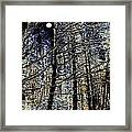 Deep In The Moonlit Forest Framed Print