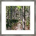 Depth Of Trees Framed Print