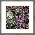 Desert Chicory And Heliotrope Framed Print