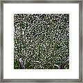 Diamonds By Nature Framed Print