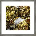 Diamonds In A Dragon Nest Framed Print