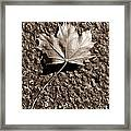 Dipped In Bronze Framed Print